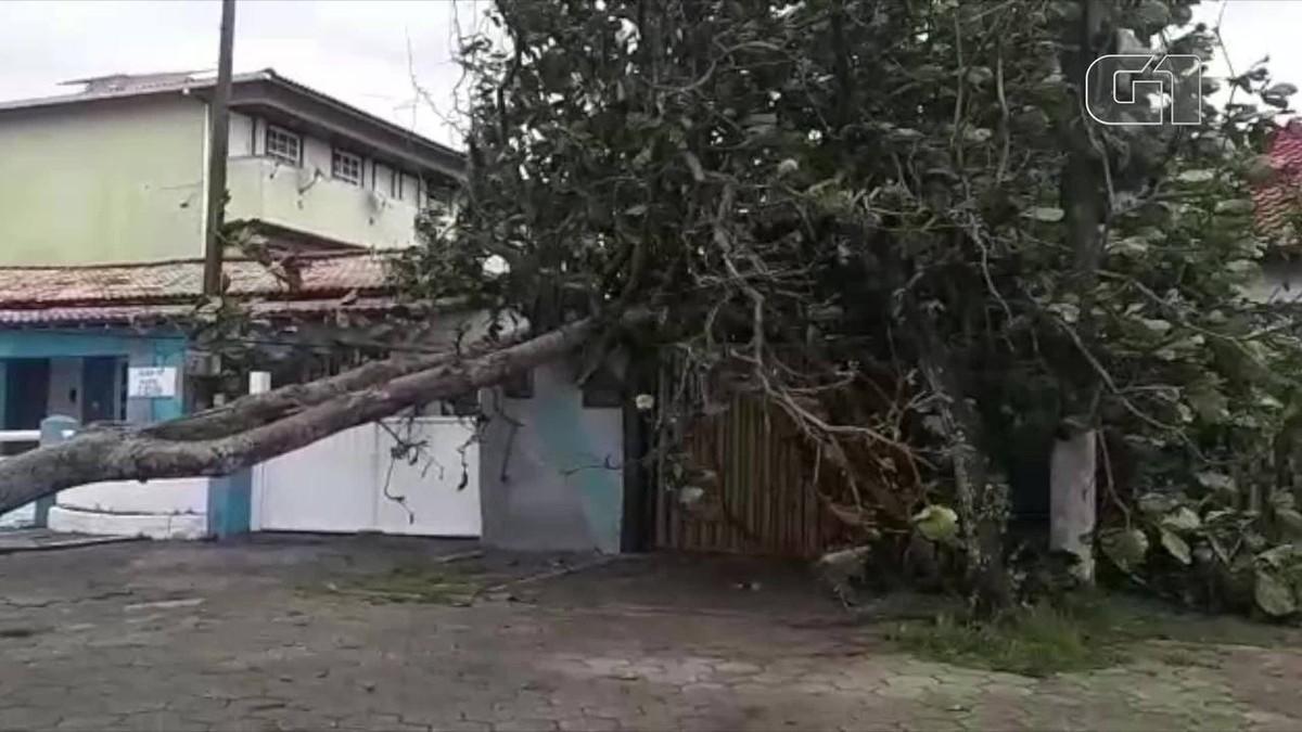 Árvore cai em muro de casa em Casimiro de Abreu, no RJ - G1