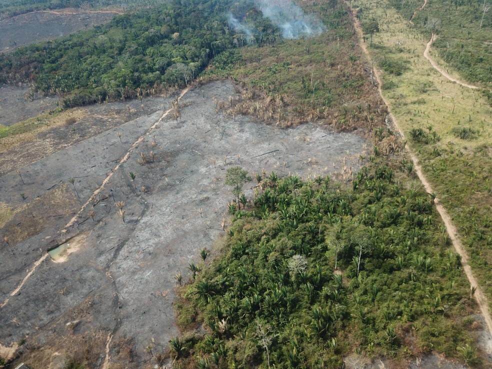 Foto aérea mostra área de desmatamento em Rondônia em julho de 2021. — Foto: PF/Reprodução