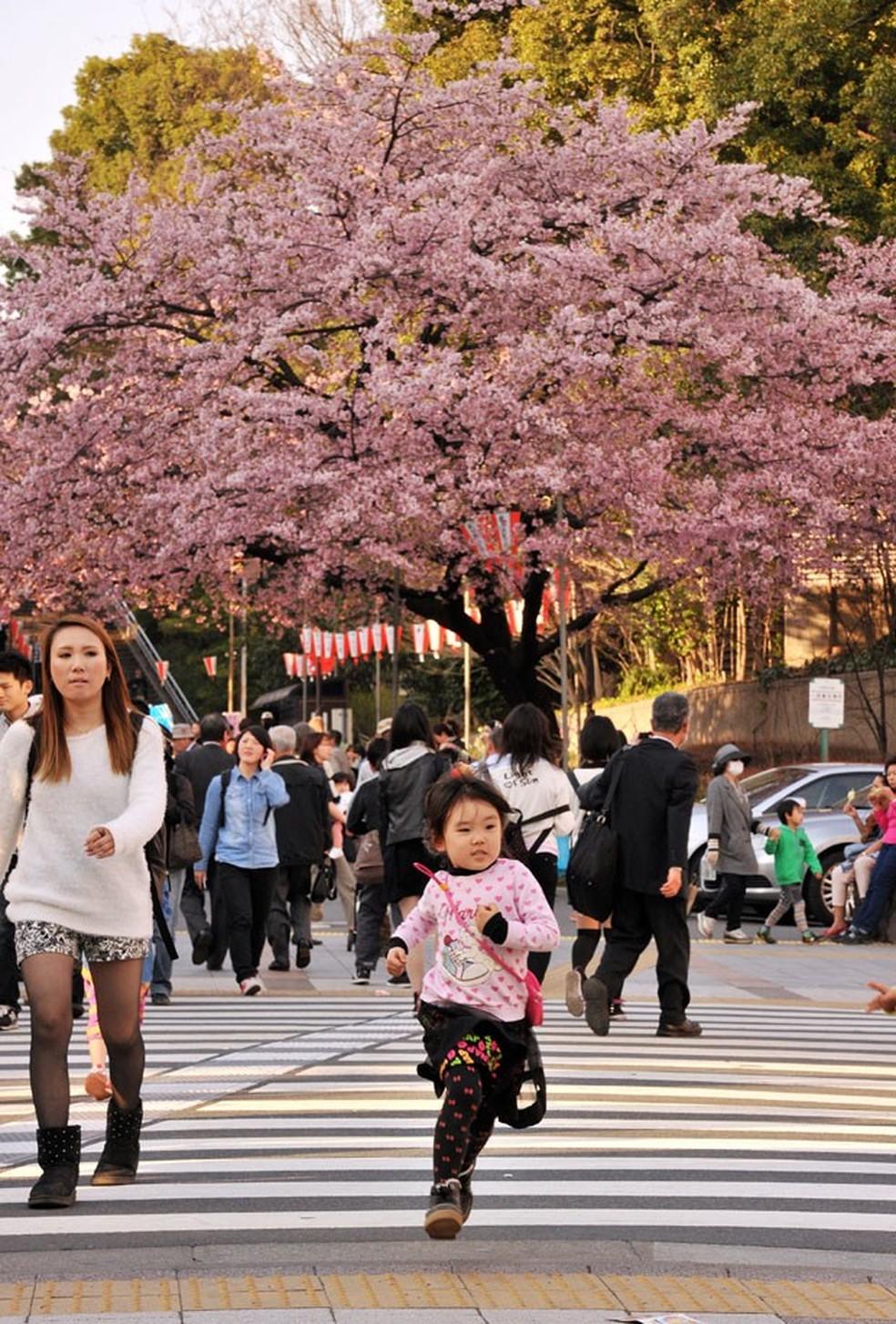 Cerejeiras em Tóquio  — Foto: Yoshikazu Tsuno/AFP