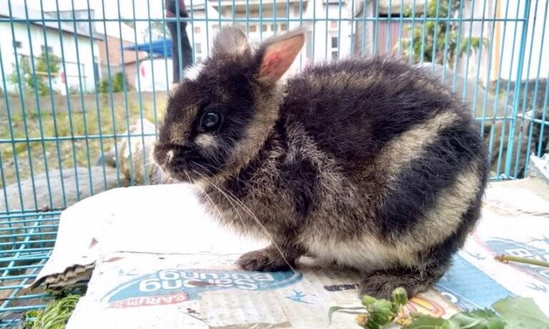 Espécime de coelho mais raro do mundo é visto em post no Facebook (Foto: KSNP)