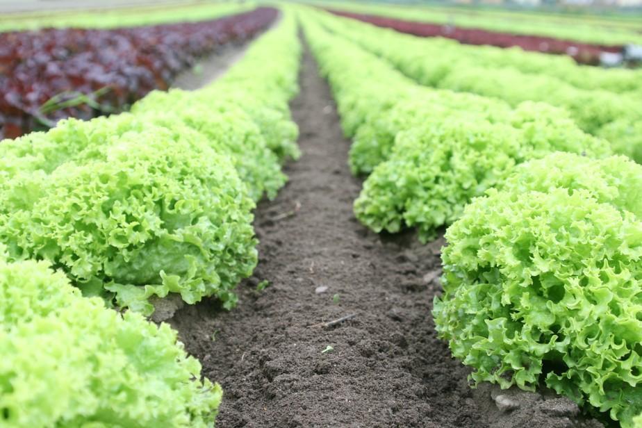 Saiba por que apostar na produção de hortaliças super nutritivas durante o inverno