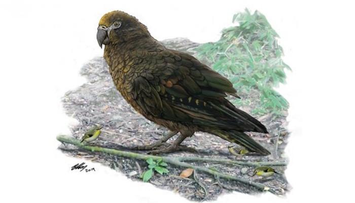 Ilustração do papagaio gigante Heracles perto de um filhote (Foto: Ilustração de Brian Choo/Universidade Flinders)