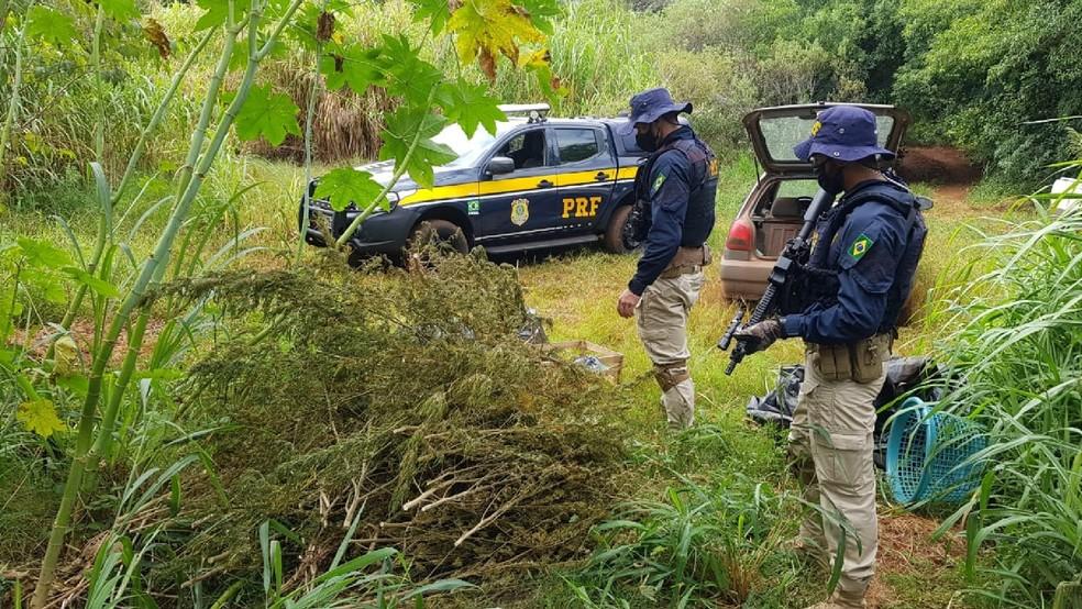 PRF encontrou drogas já prontas para o consumo também. — Foto: PRF/Divulgação