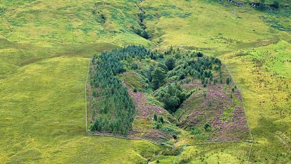 Este cercado na foto acima, onde crescem árvores e flores, revela o impacto dos animais que pastam e como seria a paisagem escocesa sem eles. — Foto: Passion Pictures/BBC
