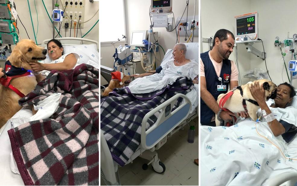 Cães terapeutas alegram pacientes na UTI do Hospital das Clínicas de Ribeirão Preto — Foto: Hospital das Clínicas/Divulgação