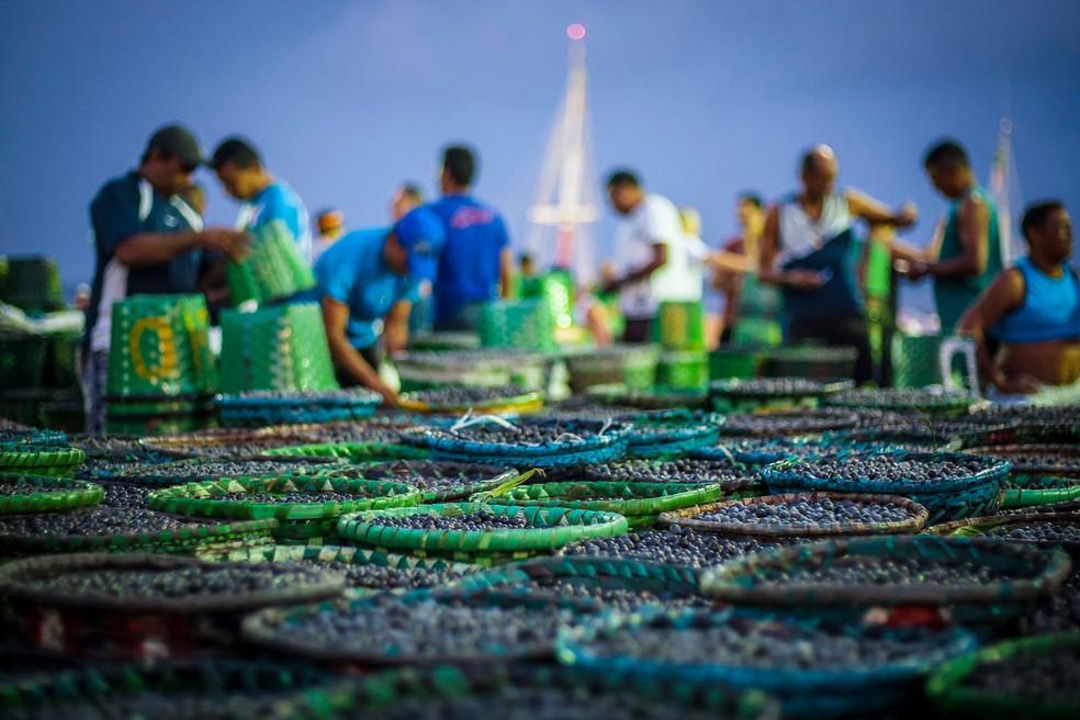 Açaí é um dos produtos mais consumidos e procurados no mercado — Foto: Tarso Sarraf / Arquivo Pessoal