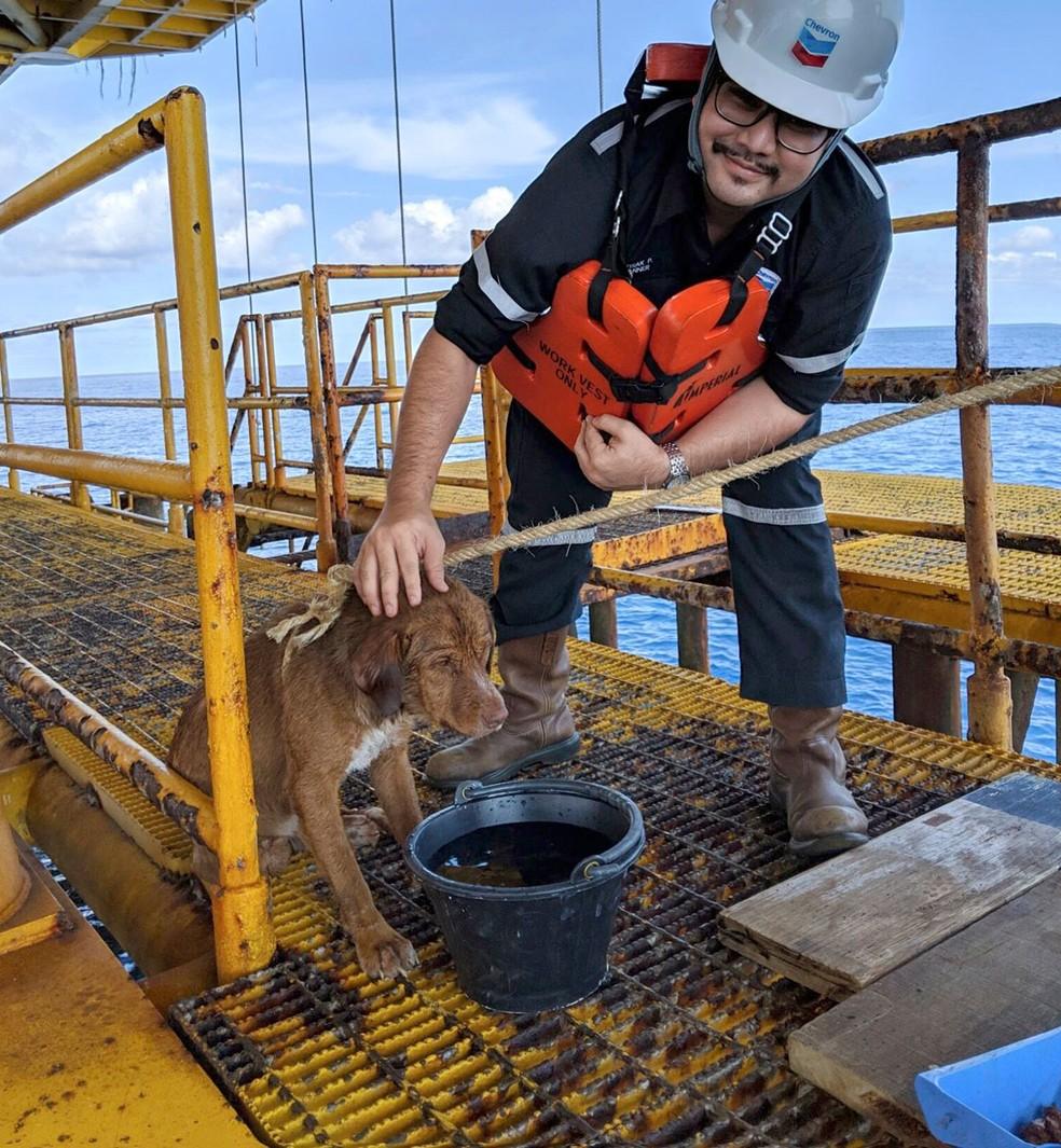 Cão é resgatado em plataforma de petróleo. — Foto: Vitisak Payalaw via AP