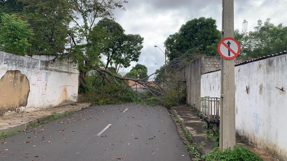 Árvore caída na Zona Leste de Teresina após chuva — Foto: Fábio Lima