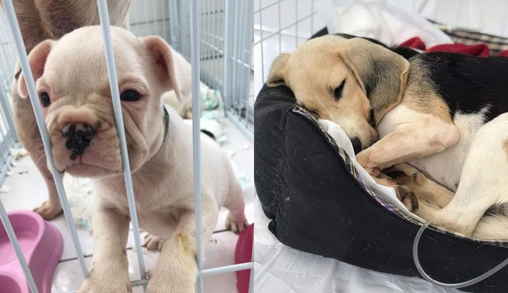Animais foram resgatados de canil em Piedade e passam por tratamento — Foto: Arquivo pessoal