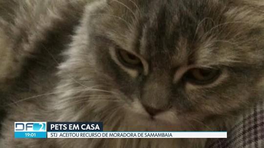Moradora de Samambaia consegue na justiça direito de criar gata em casa