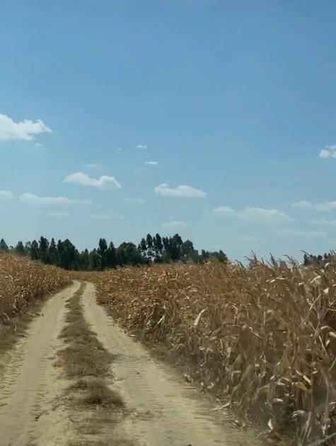 Plantação (Foto: Reprodução)