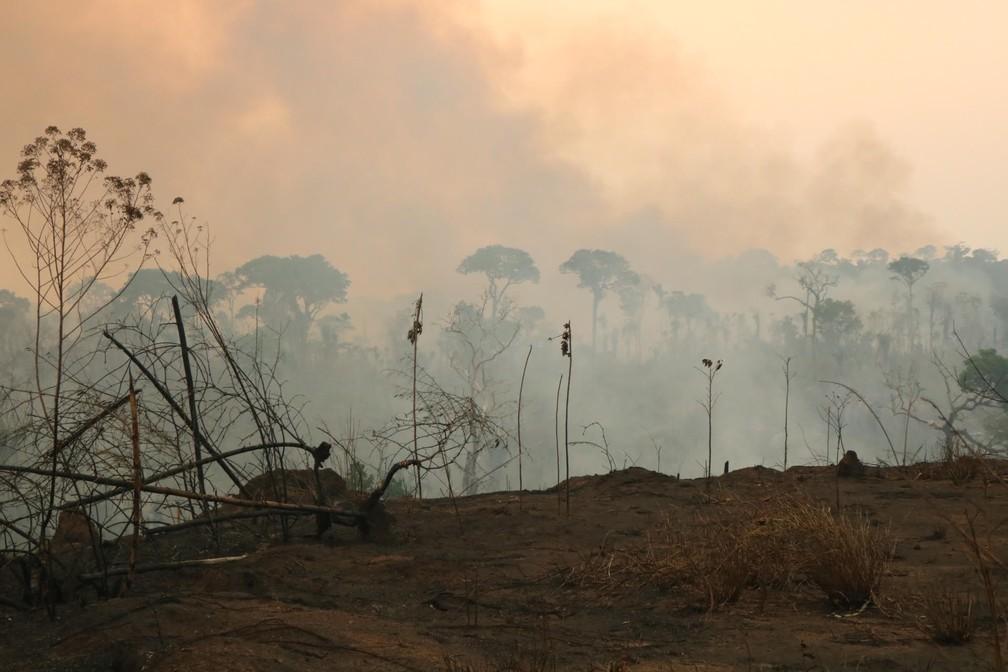 Queimadas em Rondônia. — Foto: MP-RO/Divulgação