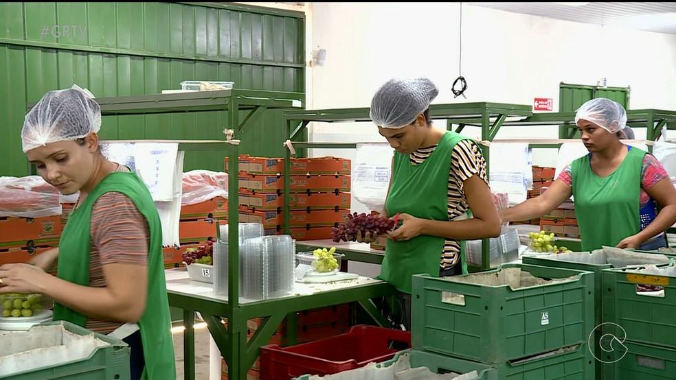 98% das uvas de mesa e 95% das mangas exportadas pelo país saem do Vale do São Francisco — Foto: Reprodução/ TV Grande Rio