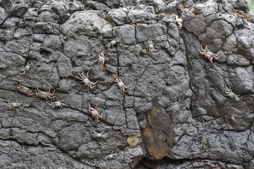 Caranguejos cobrem rocha ao lado de piscina natural em Fernando de Noronha — Foto: Fábio Tito/G1
