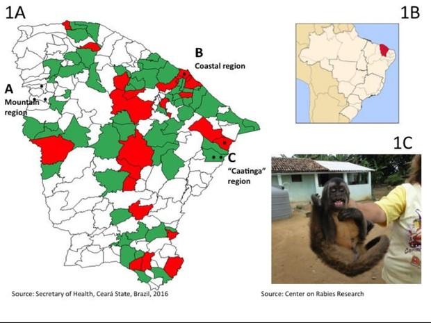 Mapas e imagem de animal fazem parte da publicação  (Foto: Reprodução)