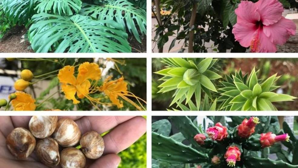 Várias plantas comuns em cidades têm partes comestíveis (Foto: BBC)