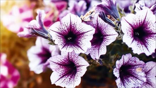 Produção de flores gera 200 mil empregos no Brasil