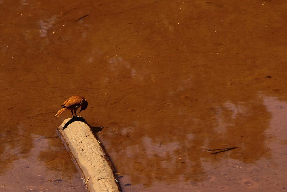 Pássaro pousa na margem do Rio Paraopeba, em Brumadinho (MG), dias depois do rompimento da barragem — Foto: Edmar Barros/Estadão Conteúdo