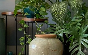 Saiba quais são as melhores plantas para ter dentro de casa