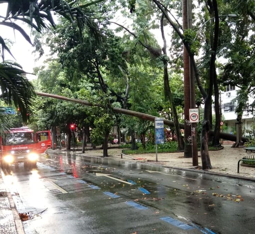 Queda de árvore interdita parcilamente a Rua Humaitá na manhã deste domingo (2) — Foto: Divulgação /Centro de Operações
