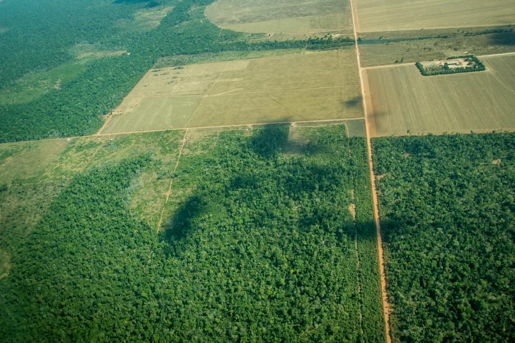 Fiscalização aplicou R$ 7,5 milhões em multas por crime ambiental em uma área de 1,5 mil hectares desmatados na região de Marcelândia — Foto: Christiano Antonucci/ Secom-MT