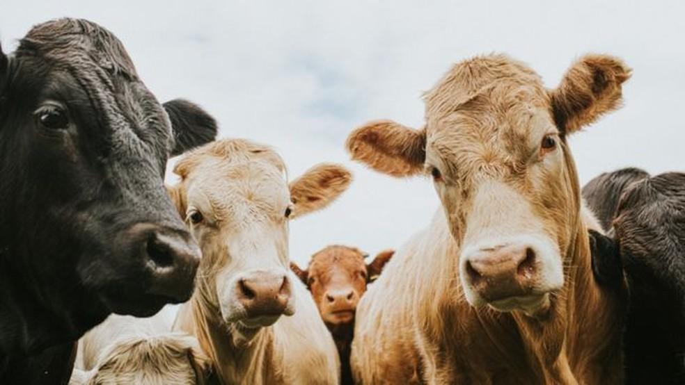 Críticos da medida dizem que ela prejudica o setor agropecuário — Foto: Getty Images