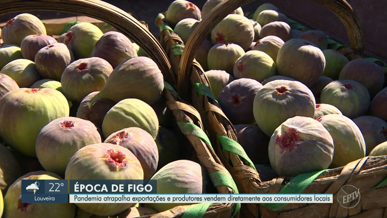 Com dificuldade para exportação, produtores de figo buscam venda direta para consumidores