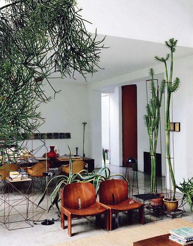 Décor do dia: cactos e suculentas na sala de estar (Foto: Divulgação/ The Secret Garden)