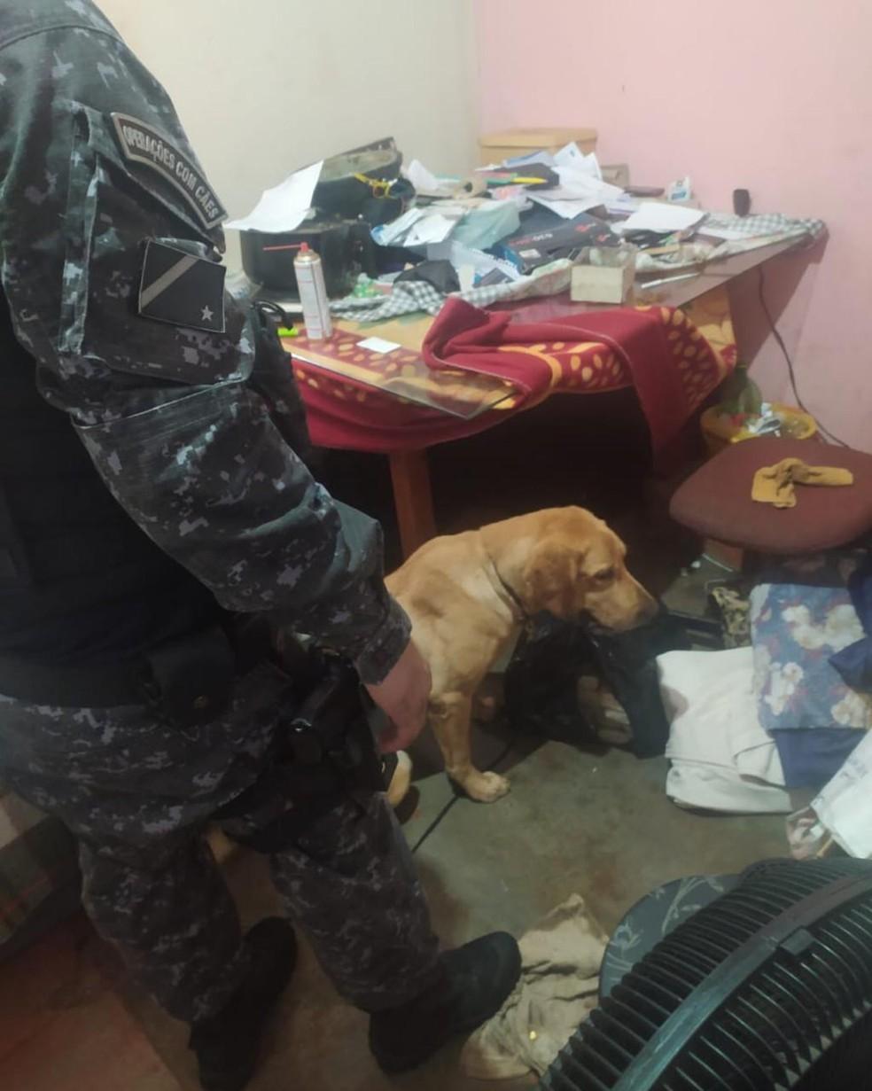 Policiais contaram com cães farejadores para varredura — Foto: Polícia Militar/Divulgação