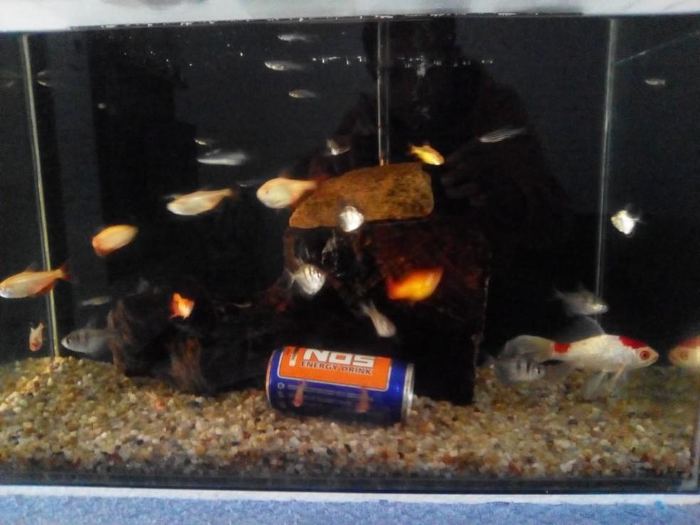Douglas diz que costuma redobrar os cuidados com os peixes no frio (Foto: Arquivo Pessoal/Douglas Felipe França)
