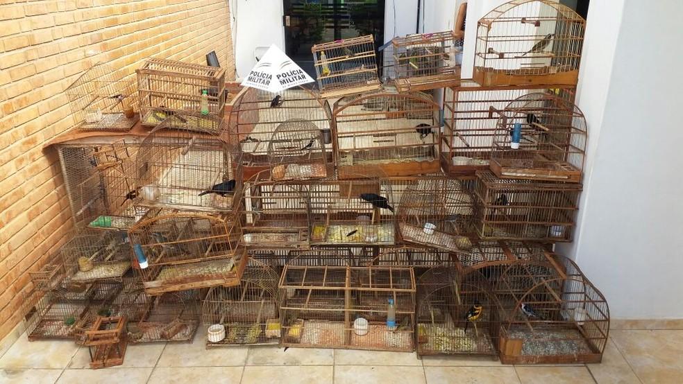 Aves estão aptas a se reproduzirem, segundo a PM (Foto: Polícia Militar/Divulgação)
