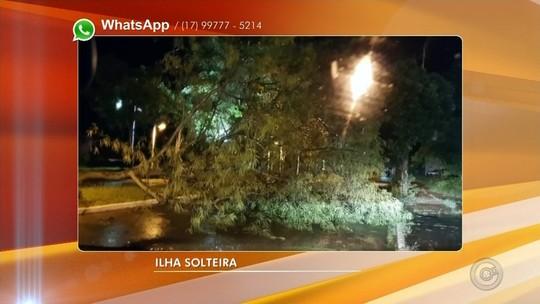 Temporal causa queda de árvores e interdições em rodovias do noroeste paulista