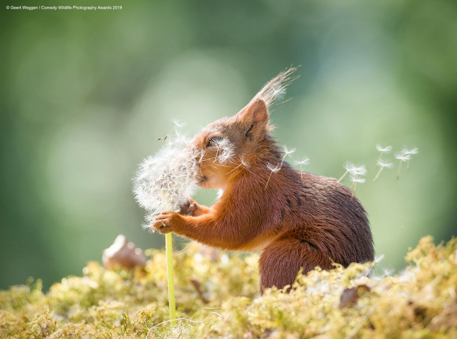 Squirrel Requests (Photo: Reproduction Comedy Wildlife Photography Awards 2019)