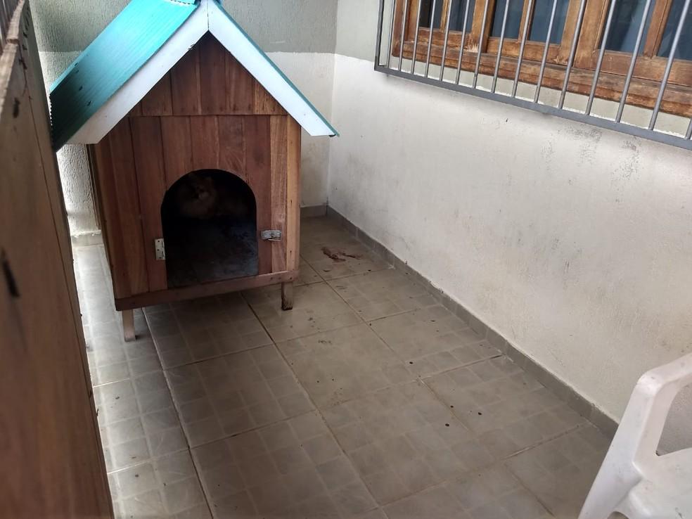 Local onde cachorra foi baleada em Porto Velho — Foto: Diêgo Holanda/G1