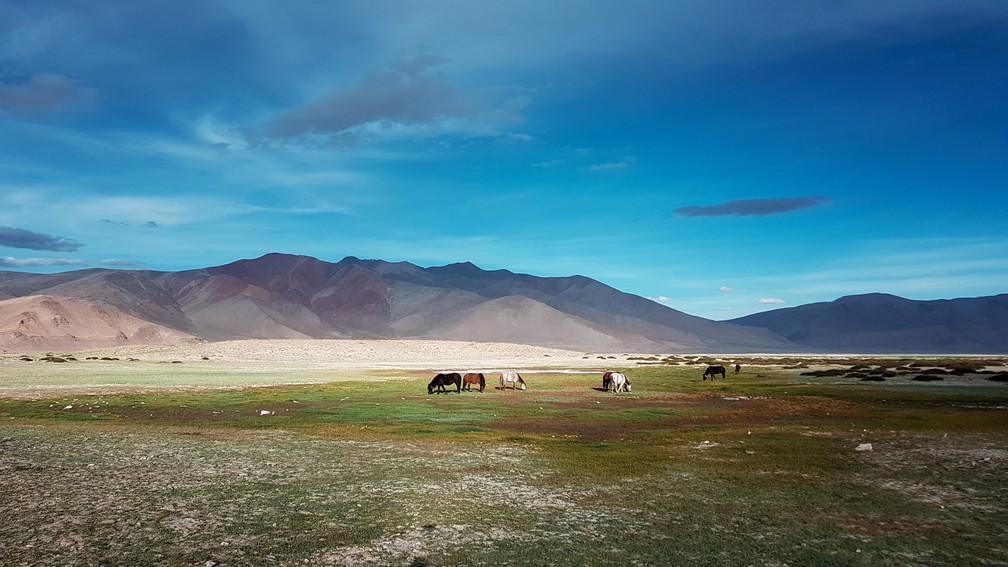 Região do lago Tso Kar, em Ladakh, na Índia (Foto: Rafael Miotto / G1)