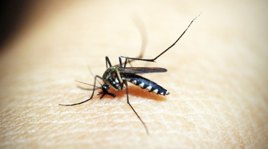 A guilhotina pode decapitar 30 insetos de uma só vez (Foto: Reprodução/Pexels)
