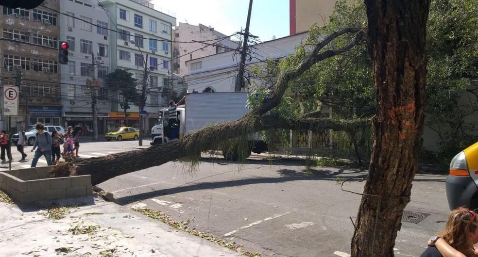 Árvore cai e interdita Rua Alves de Brito, na Tijuca, Zona Norte do Rio. — Foto: Reprodução/Centro de Operações