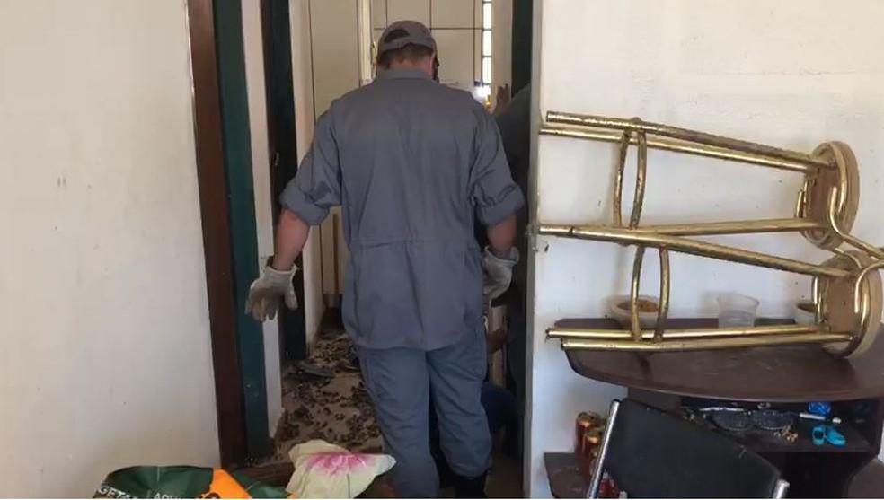 Animais foram resgatados de casa em Avaré (SP) após denúncia de maus-tratos — Foto: Corpo de Bombeiros/Divulgação
