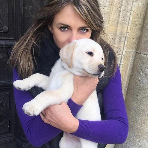 A atriz Elizabeth Hurley com seu cachorrinho Hector (Foto: Instagram)
