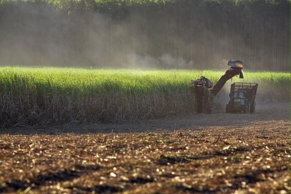 Município de Denise deve ser o maior produtor de cana-de-açúcar em MT (Foto: Tadeu Fessel /Divulgação UNICA )