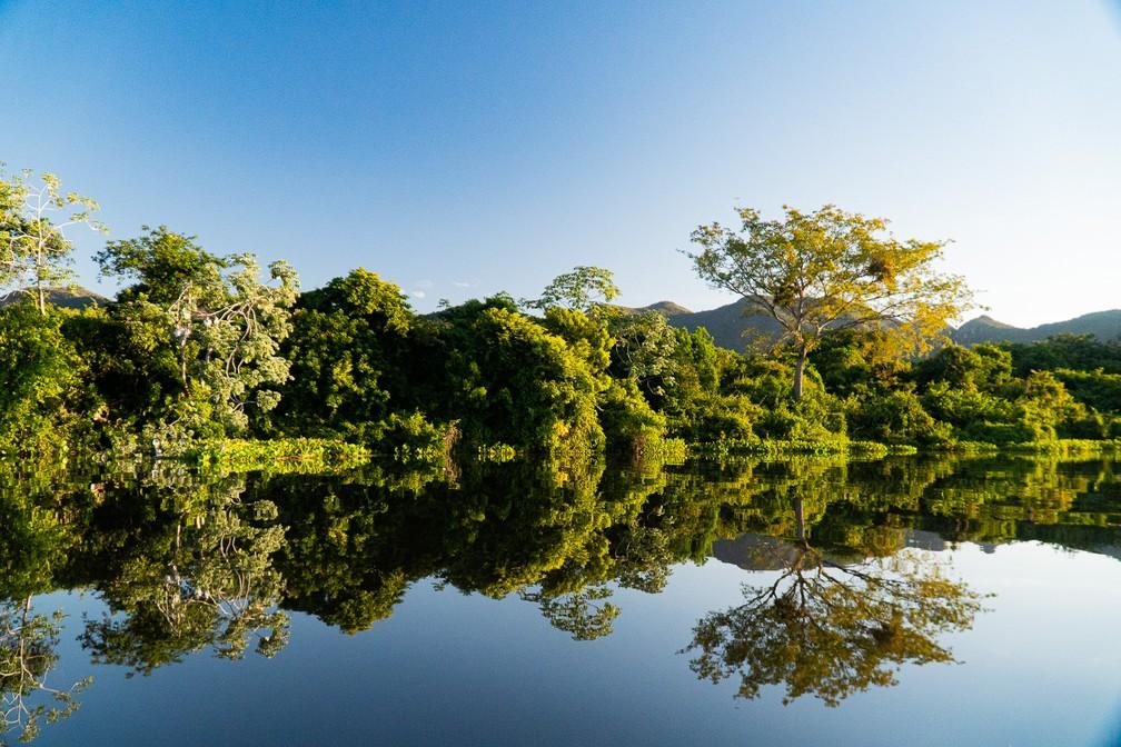 Em 2017, o Pantanal ainda mantinha 83,2% de sua formação natural, segundo os dados mais atuais disponíveis do Projeto MapBiomas — Foto: Eduardo Palacio/G1
