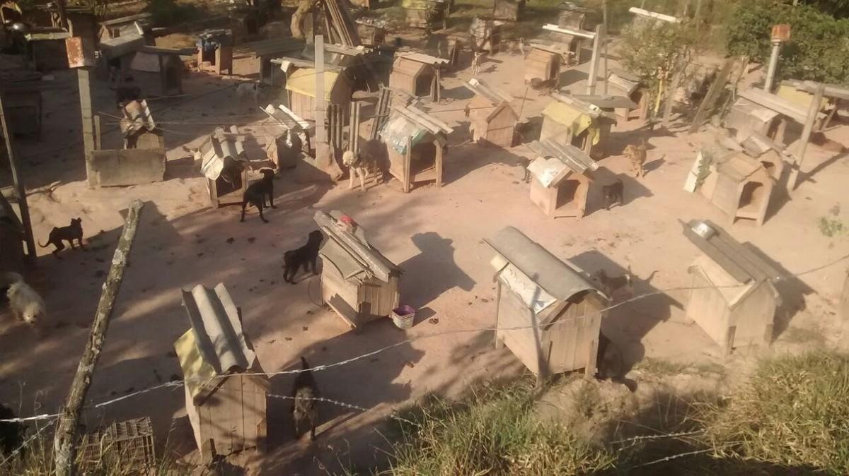 Moradora transforma parte de rua em 'vila de cães' e revolta vizinhos em Itaquaquecetuba