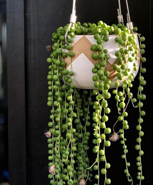As bolinhas do Cordão de Pérolas são charmosas e diferentes (Foto: Instagram/ Reprodução)