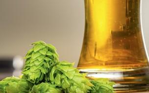 Conheça o lúpulo, que dá aroma e sabor à cerveja