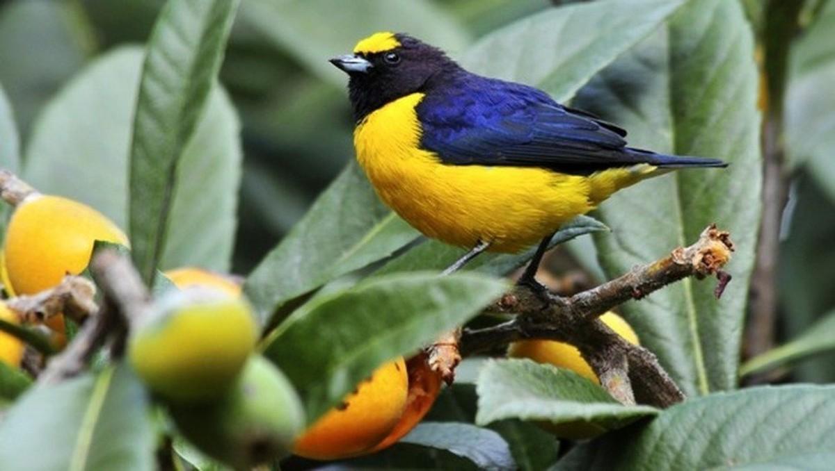 Sons da Terra 05/08: as aves que falam