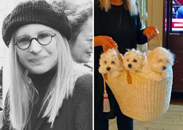 A cantora e atriz Barbra Streissand e seus cachorrinhos (Foto: Instagram)
