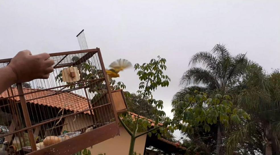 Pássaros apreendidos em Tietê foram devolvidos à natureza — Foto: Polícia Militar Ambiental/Divulgação