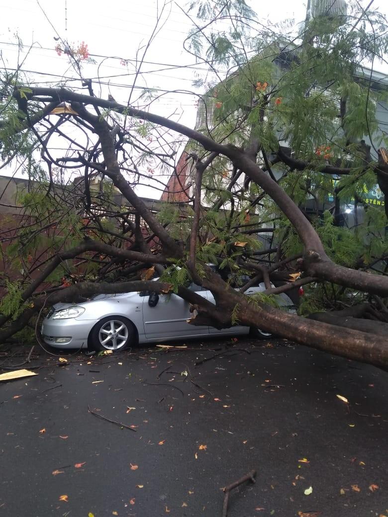 Queda de árvore atinge carro no Conjunto Habitacional Ana Jacinta, em Presidente Prudente