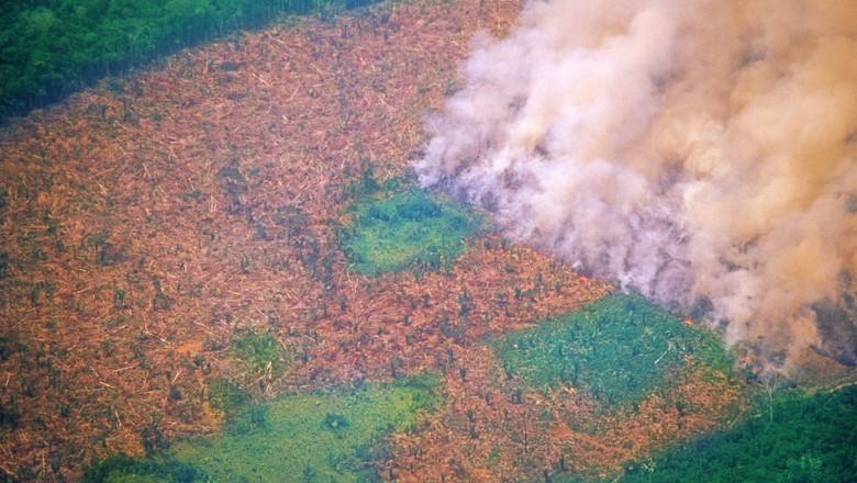 fogo-amazonia-incendio-floresta (Foto: Getty Images)