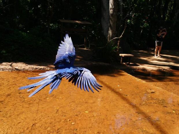 En el Parque das Aves es posible entrar en algunos viveros como el de las araras y el de los tucanes (Foto: Fabiula Wurmeister / G1)